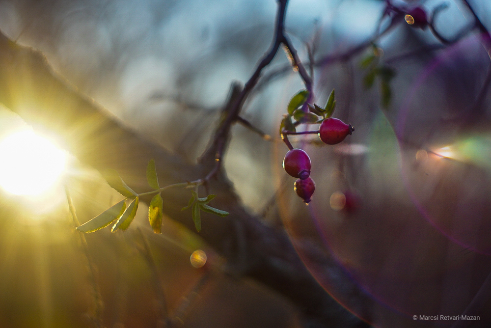 Helios 44-2 Swirly Bokeh Review, Sample Images for Under $50